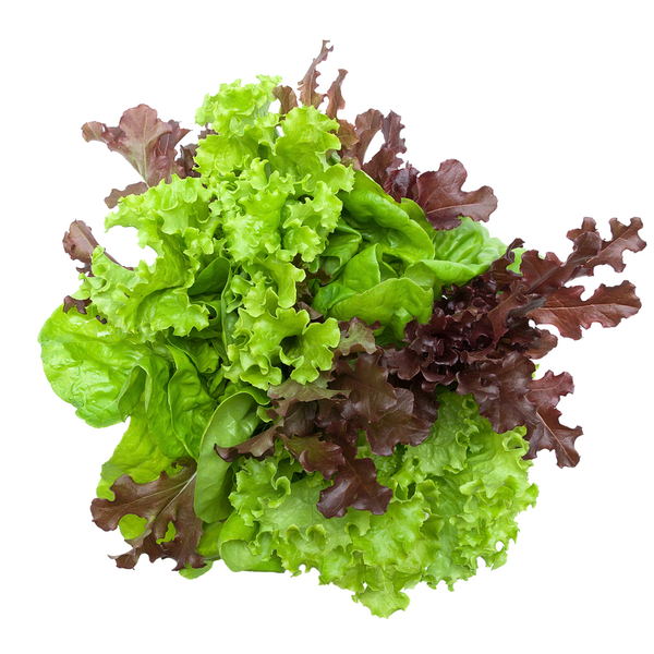 Lettuce (various)