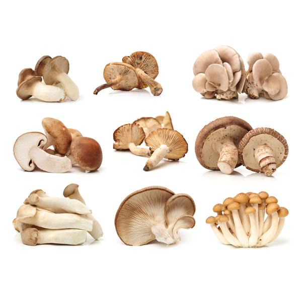 Mushrooms (various)