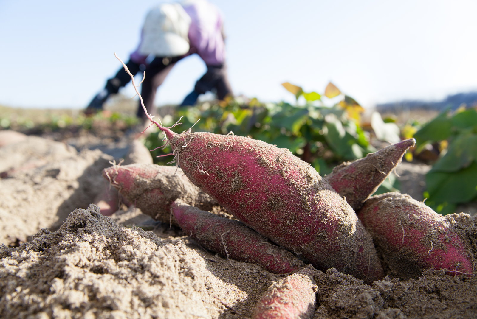 New study shows how quickly organic food can get rid of pesticides in body