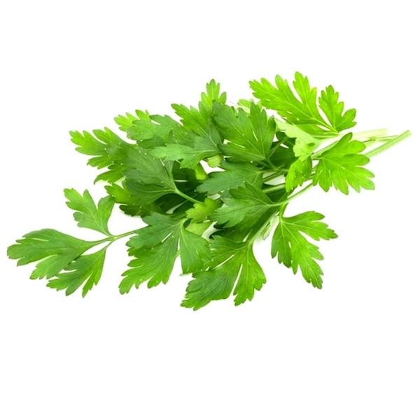 Giant.parsley